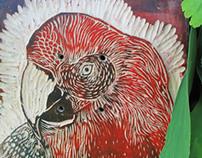 Parrot Pirata