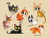 My personal profect: CAT.LEN.DAR 2017