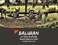 Baluran National Park Travel Package Design