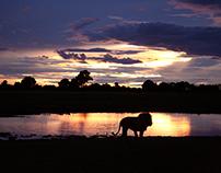 Photography - Botswana