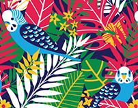 Tropical Birds Prints