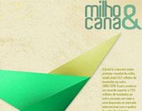 Milho & Cana