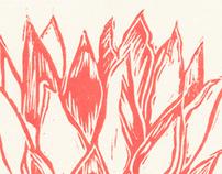 Pink Protea prints