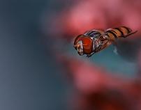 hoverfly macros