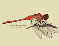 Dragonflies of Manitoba