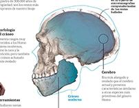 La evolucion. El Homo Sapiens es más antiguo de lo que