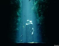 Valentine ( Underwater Theme ) 3D artwrok