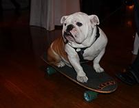 Long Island Bulldog Rescue Shady Paws Program