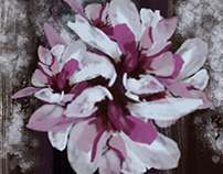 watercoloured magnolia flower illustration