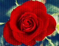 Ben-Day Rose