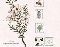 Native Plants info images