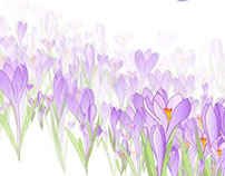 Spring backgrounds with crocuses