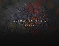 Istrian Autumn 2016