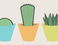 Cacti Trio