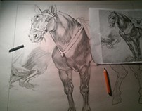Horse Study - Student Work