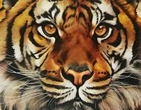 Tigre - Óleo