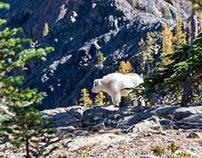Wildlife Pics - Courtesy of Unsplash