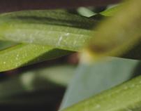 stems & leaves.