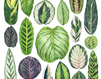 Watercolor Calathea Species Poster