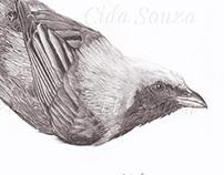 Pássaro Saíra-amarela (Tangara cayana).
