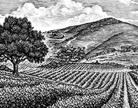 Vineyard Landscape Illustrations by Steven Noble