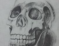 Observation study of a medical model of a skull