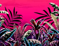 Graphic Landscape - DIMY Verão 2019