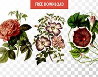 Free Vintage Flowers
