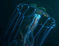 MSC Underwater
