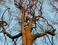 The Trees III