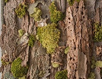 Moss and Bark Paintings
