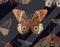 """""""Moths"""" Adam Zagajewski"""