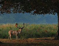 Deer Days