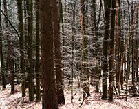 Glänzender Wald