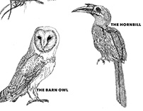 Pen illustrations- Birds & More