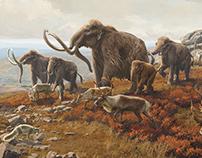 New York State Museum | Pleistocene Tundra Mural