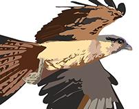 Ilustrações Pássaros do Brasil 2