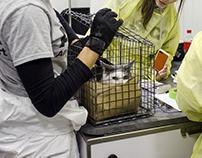 ASPCA's Cruelty Intervention Efforts