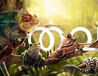 Tavala (frog)
