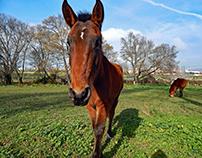 CABALLOS / HORSES