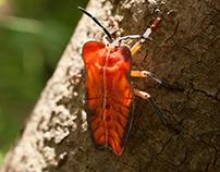 Thai Bugs