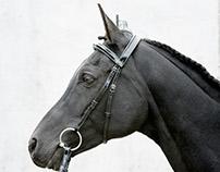 ICELAND / ENGLAND HORSES
