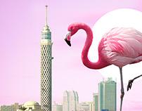 Pink-Cairo