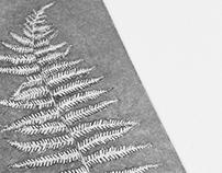 fern | printmaking