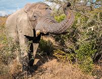 Wild Life, at Kruger National Park !