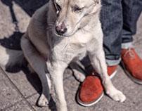 Hund schützt Eigentum zuverlässig