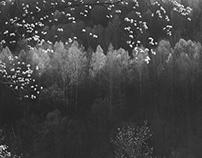 My Monochrome Spring II - Joy of Life