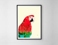 Ilustración Macaw
