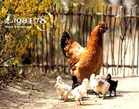 Mainkan Games Sabung Ayam Online yang Menarik