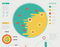 Penicilina - Infografía | Penicillin - Infographic